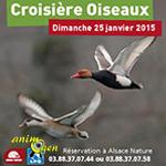 Croisière des oiseaux à Kemps (68), le dimanche 25 janvier 2015