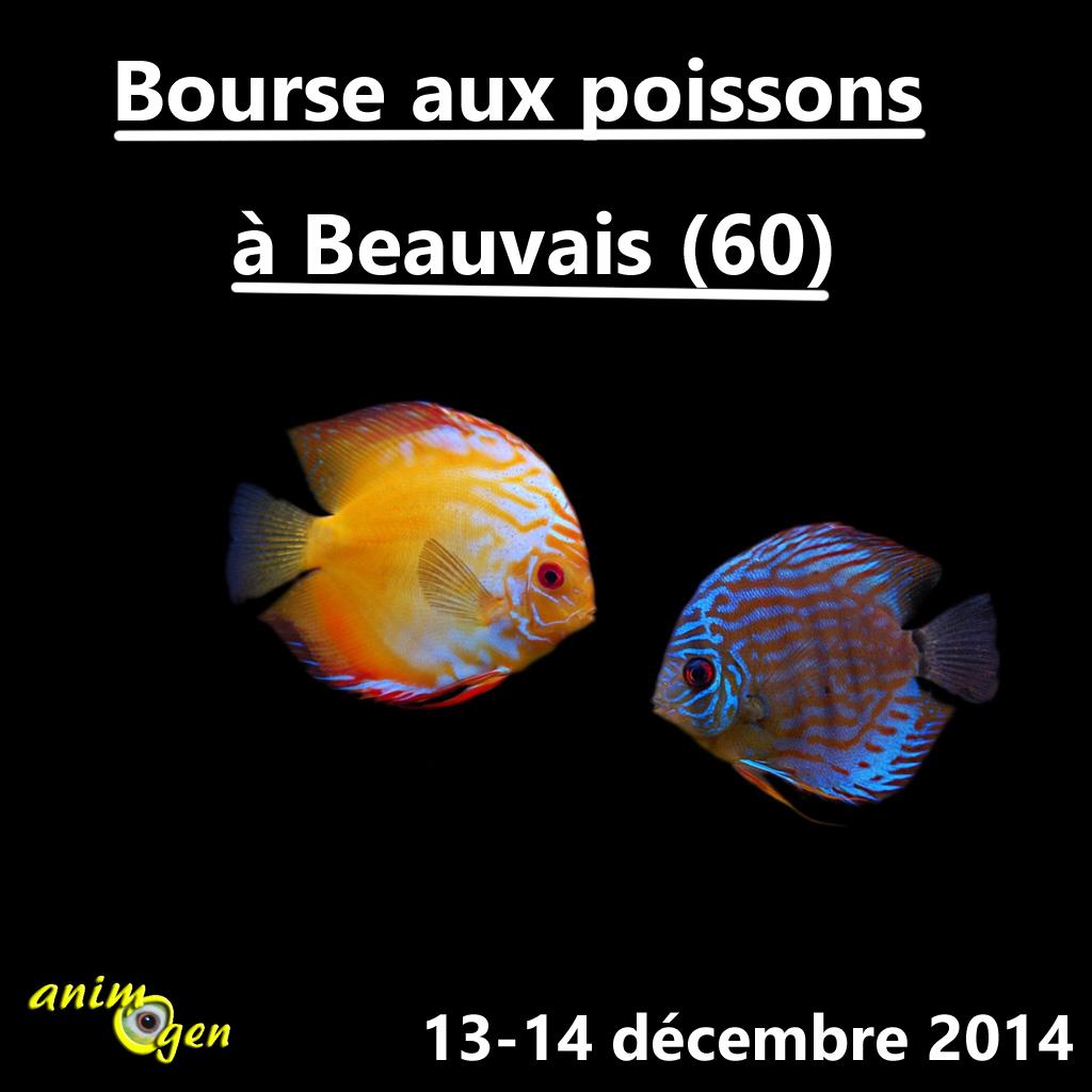 Bourse aux poissons à Beauvais (60), du samedi 13 au dimanche 14 décembre 2014