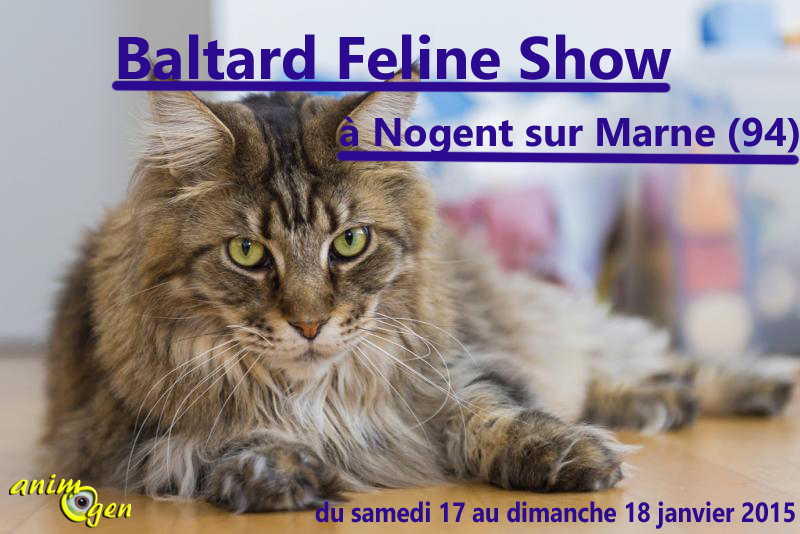 15 ème Baltard Feline Show à Nogent sur Marne (94), du samedi 17 au dimanche 18 janvier 2015