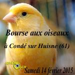 Bourse aux oiseaux à Condé sur Huisne (61), le samedi 14 février 2015