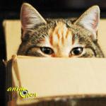 Chat et déménagement : comment faire rimer les deux ?