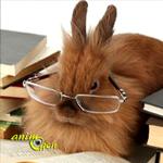 Comportement : comment éviter qu'un lapin ne s'ennuie ?