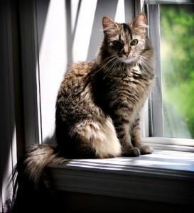 Education : apprenez en douceur à votre chat comment vivre à l'intérieur