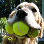 Jeu entre chien et maître : renforcer la complicité et respecter la place de chacun