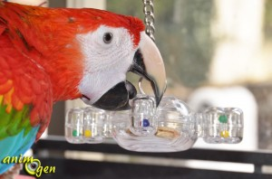 Jeu pour moyens et grands perroquets : Space Circles, Creative Foraging Systems (Caitec)
