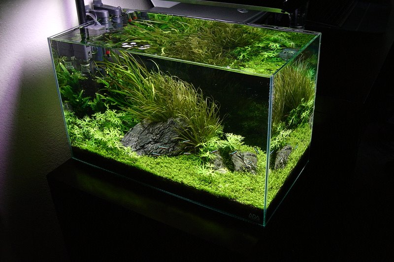 L Eclairage Dans Un Aquarium D Eau Douce Type Comparatif