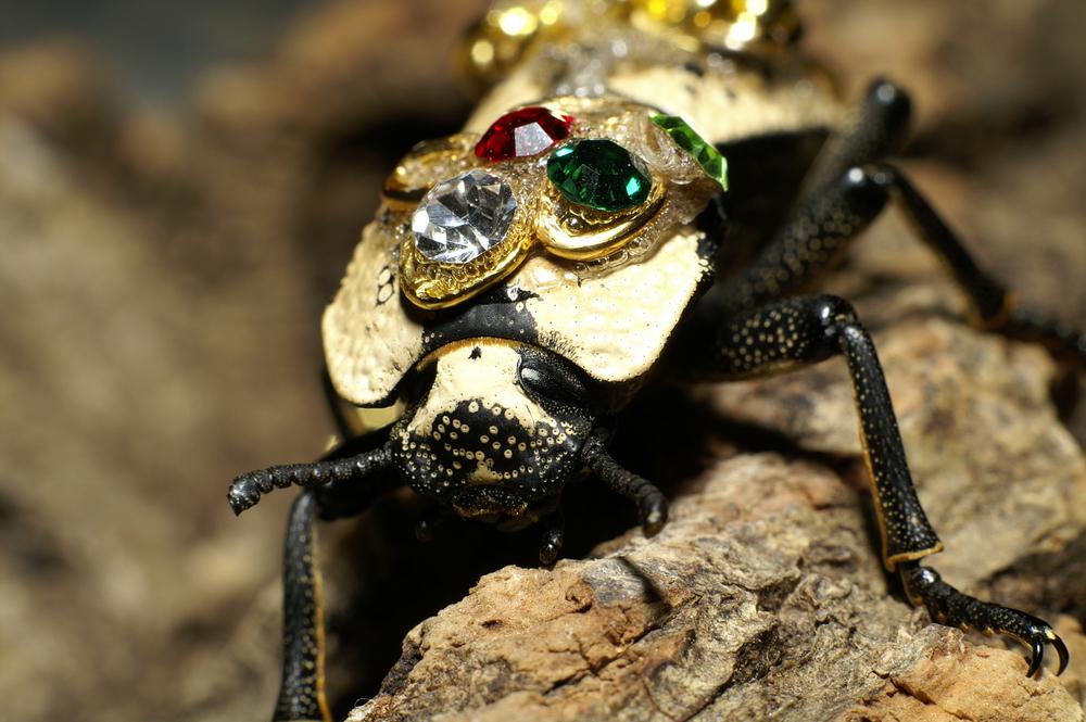 Le Maquech, scarabée et bijou vivant, ou esclave des temps modernes ?
