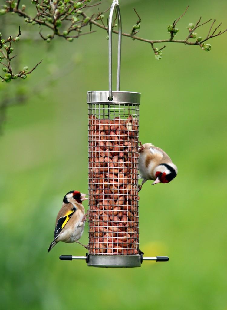 Faut-il aider les oiseaux sauvages en hiver ?