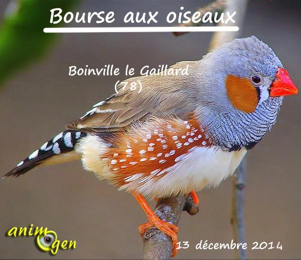 Bourse aux oiseaux à Boinville le Gaillard (78), le samedi 13 décembre 2014