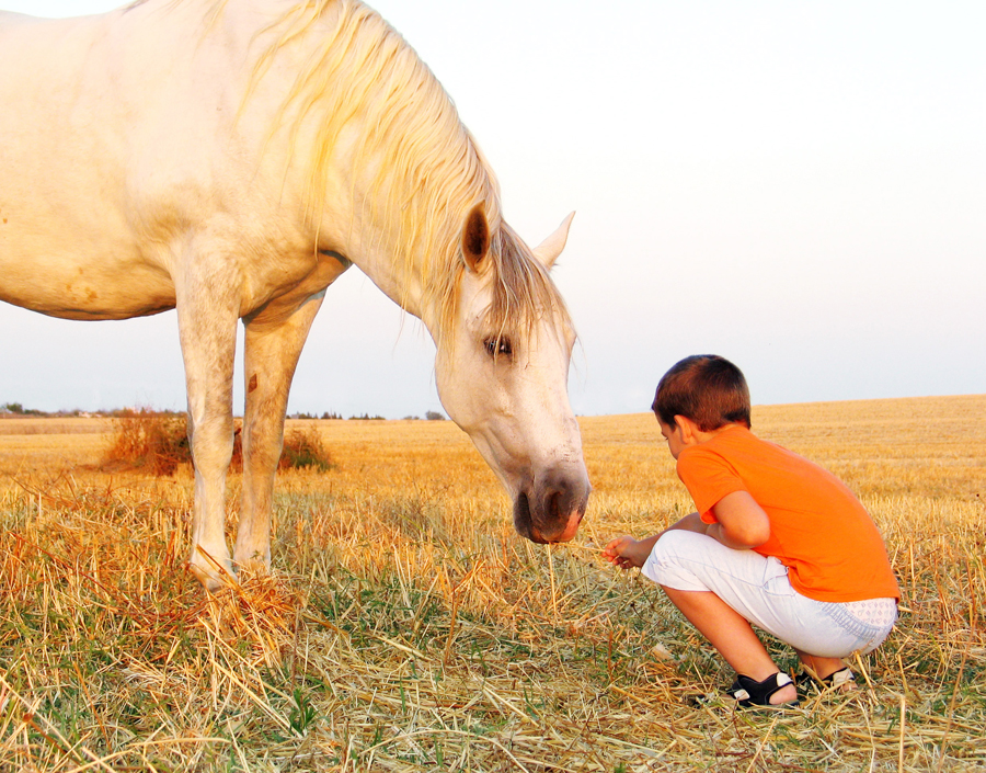 L'influence de notre stress sur les chevaux à l'étude