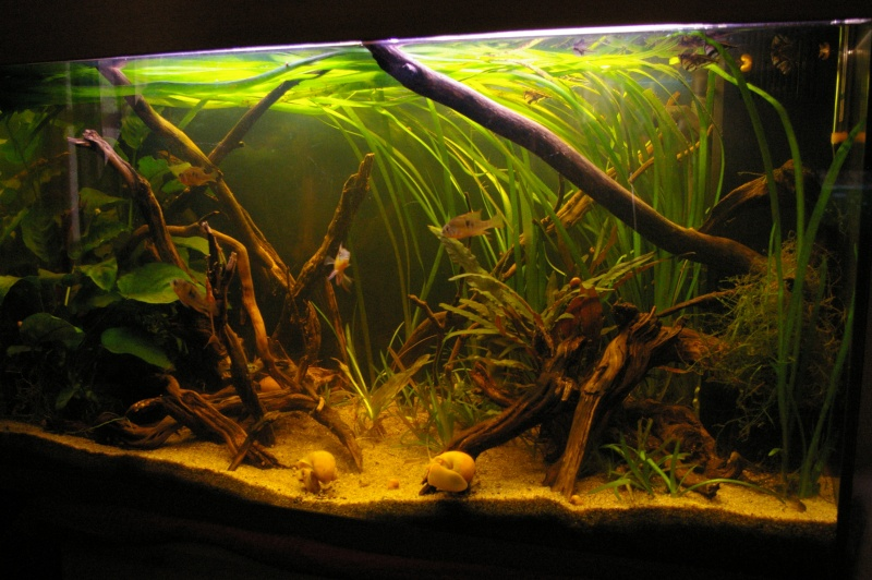 tourbe-aquarium-eau-douce-filtration-tourbe-active-utilité-rôle-granulé-bâtonnets-aquarium-aquariophilie-eau-douce-animal-animaux-compagnie-animogen-