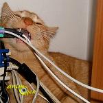 Comportement : pourquoi certains chats mangent-ils plastique, latex ou caoutchouc ?