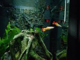 En haut, au milieu, en bas, pourquoi varier le choix de nos poissons ?