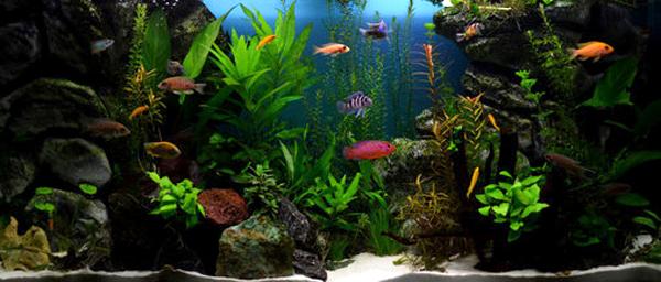 en haut au milieu en bas pourquoi varier le choix de nos poissons animogen. Black Bedroom Furniture Sets. Home Design Ideas