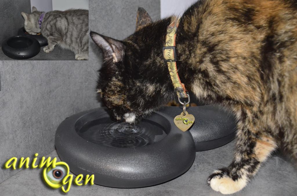 Accessoire pour chats : gamelle double Ciottoli, Imac (test, avis, prix)