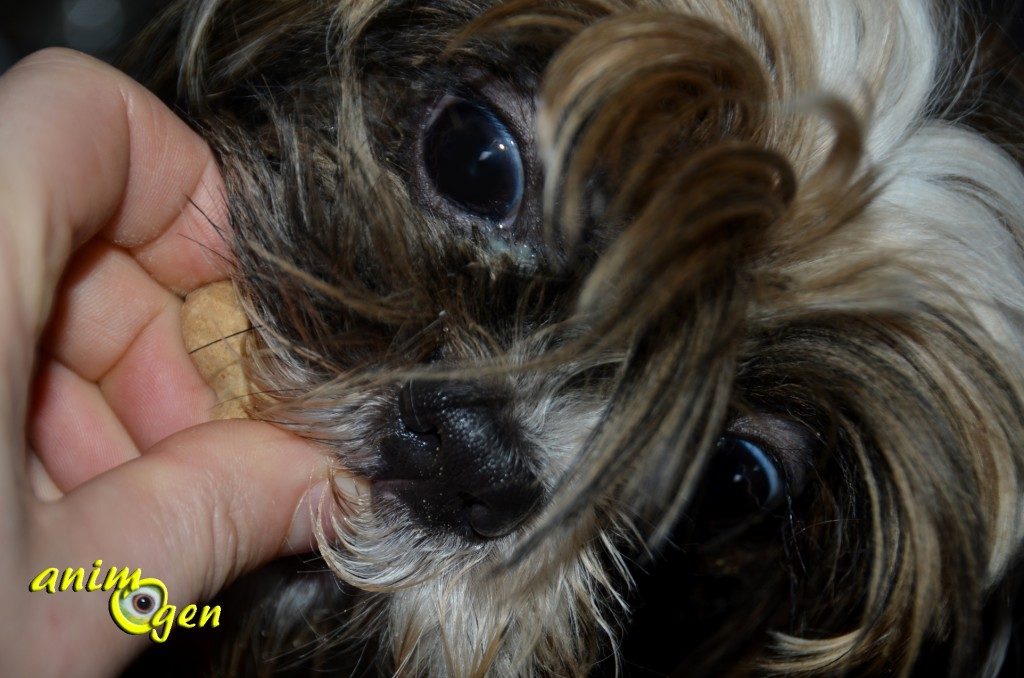 """Alimentation : friandises pour chien """"Eukanuba Healthy biscuits"""" (test, avis, prix)"""