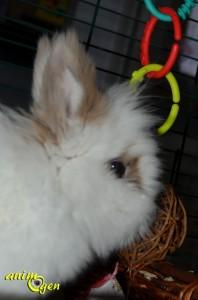 Jouet pour lapins et rongeurs : balle osier-pomme, JR Farm (test, avis, prix)