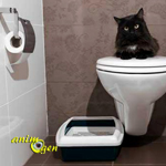 Accessoire pour chat à faire soi-même : le bac à litière ouvert ou fermé