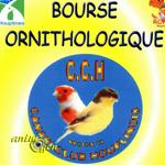 Bourse ornithologique à Houplines (59), le dimanche 1 er février 2015