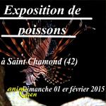Exposition de poissons à Saint Chamond (42), le dimanche 1 er février 2015