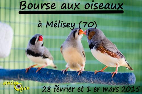 Bourse aux oiseaux à Mélisey (70), du samedi 28 février au dimanche 1 er mars 2015