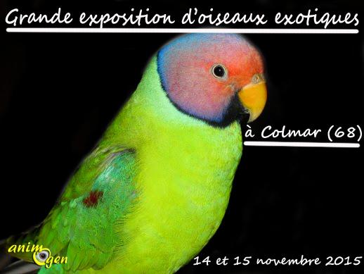 Grande exposition d'oiseaux exotiques à Colmar (68), du samedi 14 au dimanche 15 novembre 2015