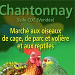 Marché aux oiseaux de cage, de parc et volière et aux reptiles à Chantonnay (85), le dimanche 22 février 2015
