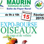Expo-Bourse oiseaux de cage et de volière à Maurin (34), le dimanche 15 février 2015