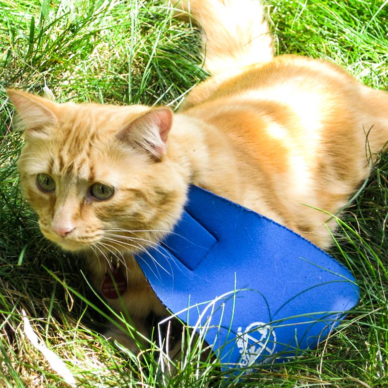 Accessoire : le CatBib, collier qui limite la prédation des chats