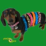 Montre-moi ton collier et je te dirai qui tu es : collier de chien, le reflet d'une personnalité