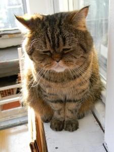 Comportement : comment les chats ressentent-ils le deuil, la perte d'un être cher ?