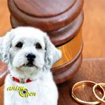Législation : que devient un chien lorsque ses maîtres divorcent ?
