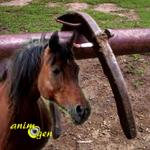 Santé : la perte de fer chez le cheval (causes, conséquences, prévention)