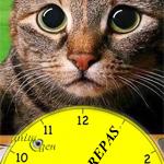 Obésité et diabète félin : une nouvelle méthode de maîtriser l'apport alimentaire de nos chats ?