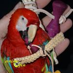 Jouet de patte pour perroquets : Corn Sheaf (test, avis, prix)