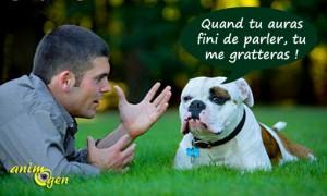 """Comportement canin : """"tais-toi et gratte !""""  (savoir communiquer avec son chien)"""