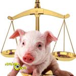 Les animaux, êtres vivants et doués de sensibilité : Assemblée Nationale contre Sénat, le dénouement
