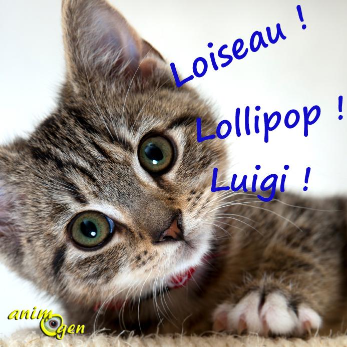 Trouver un nom pour nos chats en 2015, l'année des « L » (liste)