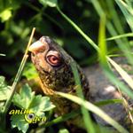 Les plantes sans danger pour les tortues d'eau (liste)