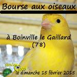 Bourse aux oiseaux à Boinville le Gaillard (78), le dimanche 15 février 2015