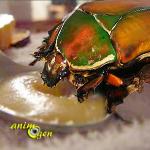 """Alimentation : préparez une gelée de fruits """"maison"""" pour vos scarabées (recette)"""