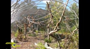 Volière extérieure : idée de réalisation d'un espace végétalisé pour gris du Gabon et du Timneh