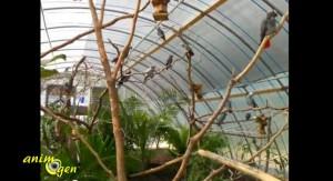 Voli re ext rieure id e de r alisation d un espace for Oiseaux pour voliere exterieure