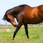 Santé : les allergies chez les chevaux (causes, symptômes, traitements, limites)