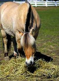 allergie-hyper-sensibilité-cause-maladie-traitement-prévention-symptôme-santé-protéine-cheval-poney-âne-animal-animaux-compagnie-animogen-4