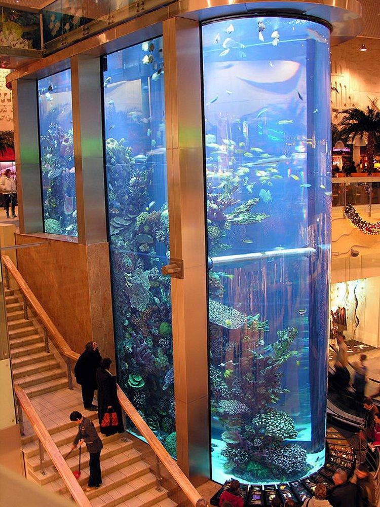 Un aquarium à l'hôpital, comme un feu de cheminée