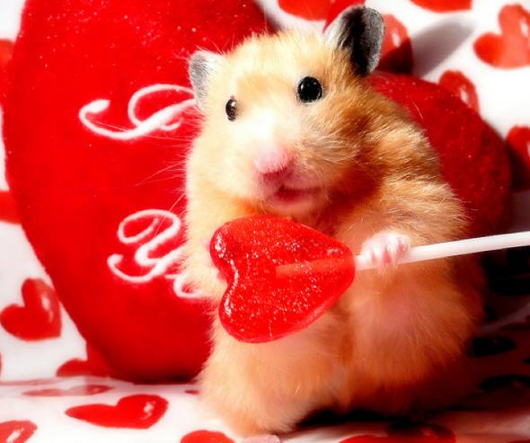 Jusqu'où iriez-vous par amour pour vos animaux ?