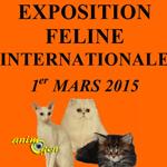 Exposition féline internationale à Fontenay le Comte (85), le dimanche 1 er mars 2015