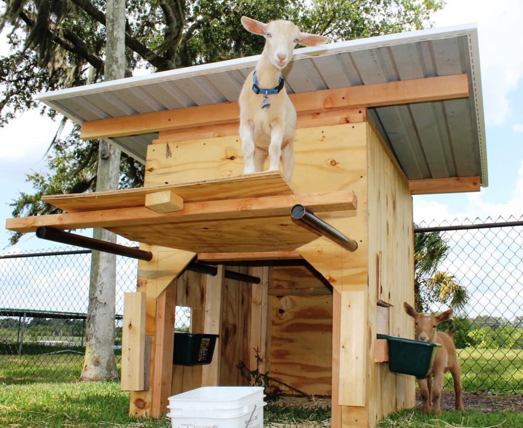 Quel enclos prévoir pour des chèvres ?