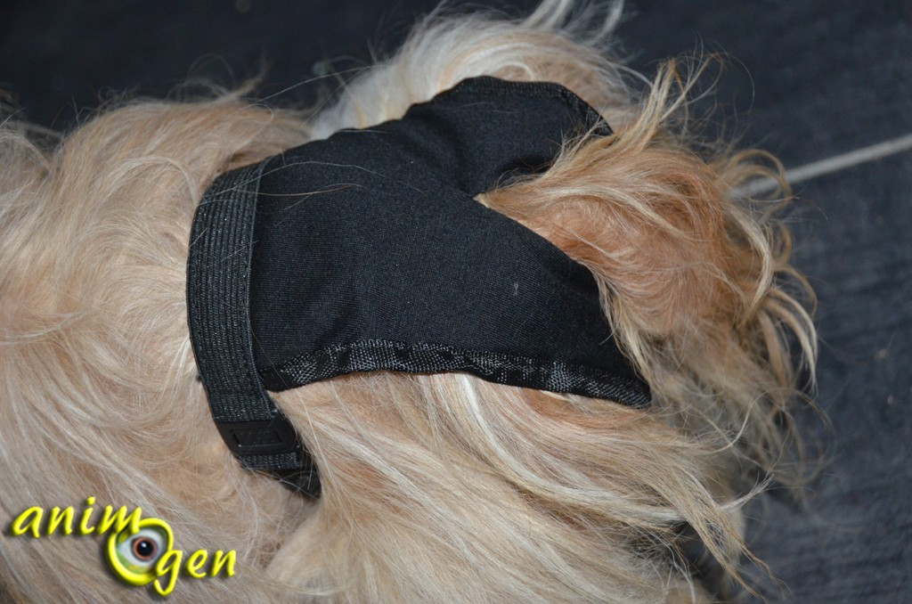 Accessoire pour chien en chaleur ou incontinent : slip de protection Trixie, (test, avis, prix)